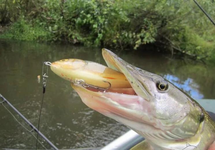 Джерки для рыбалки