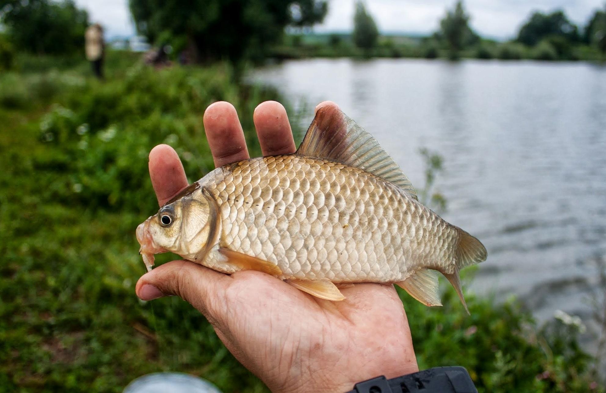 Рыбалка на карася