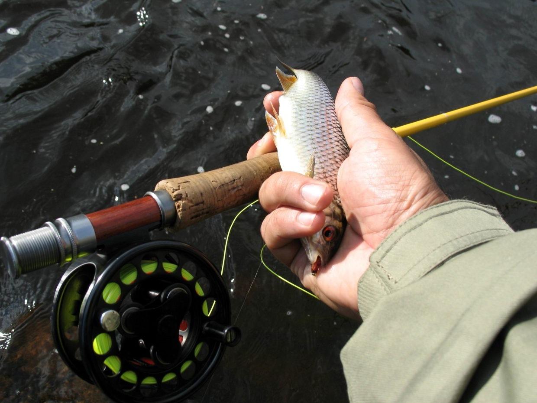 Рыбалка на воблу