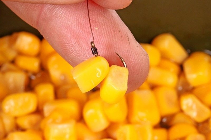 Кукуруза на сазана