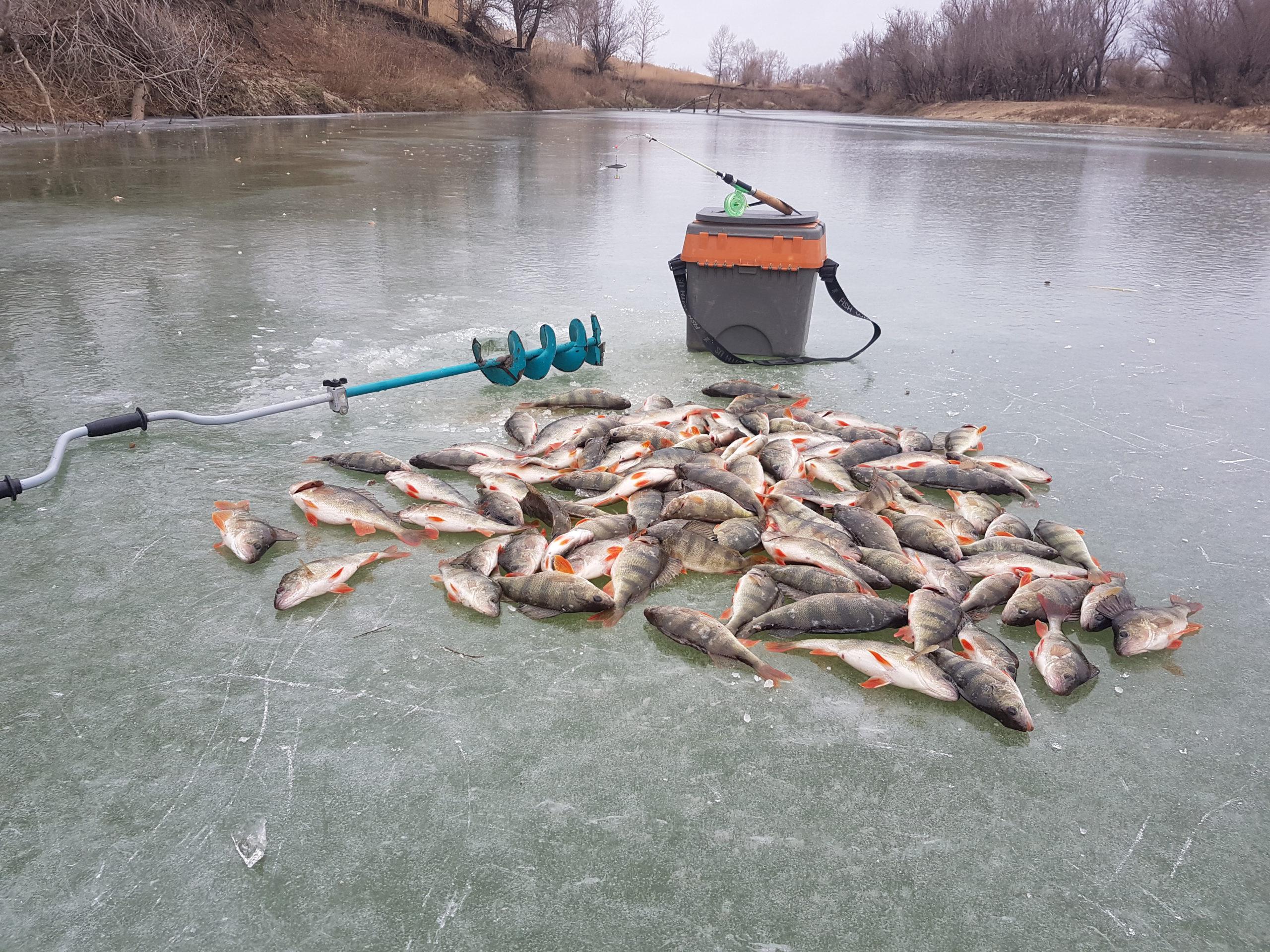 заказать зимнюю рыбалку