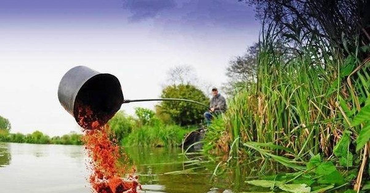 Прикормка рыбы