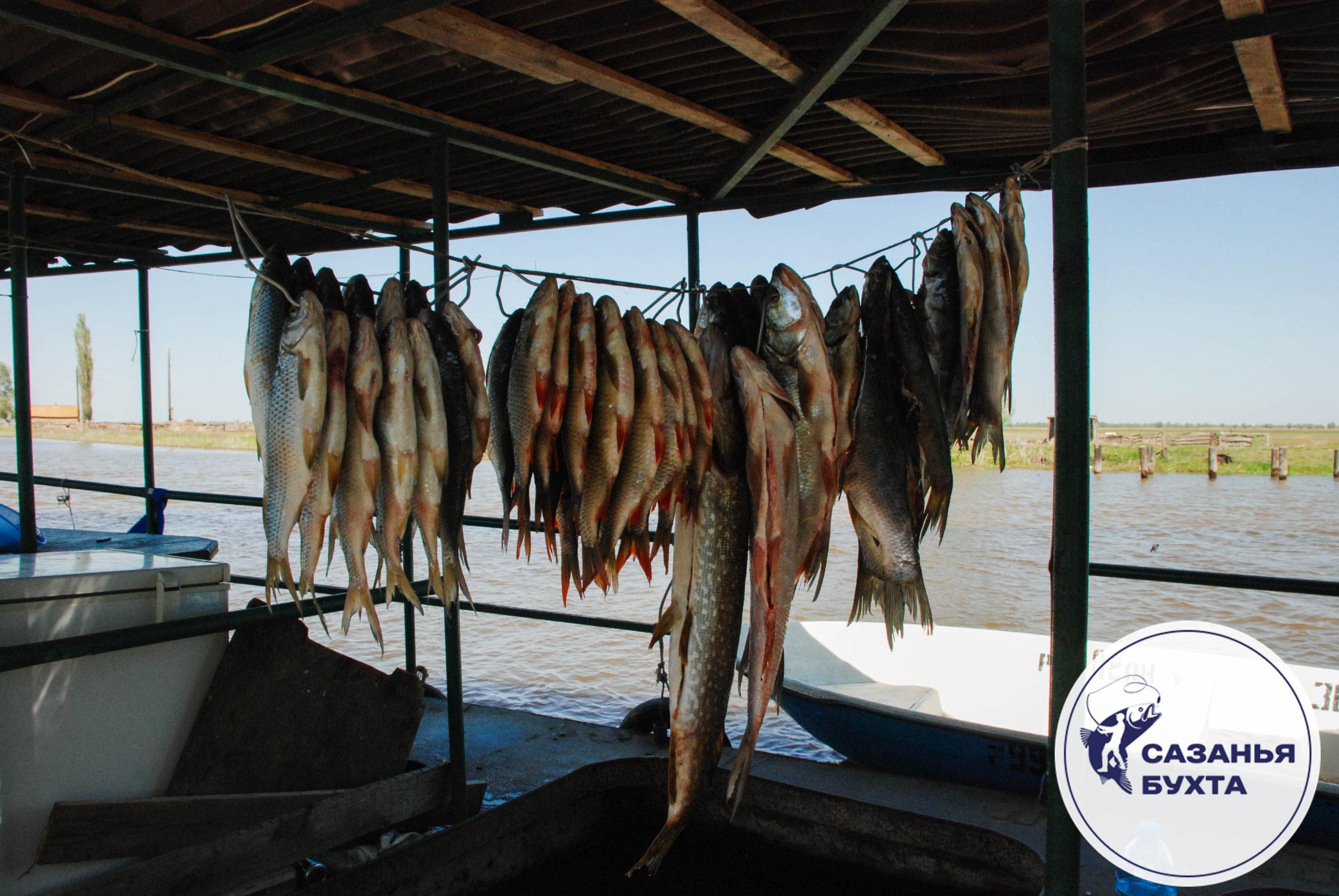 Способ сушки рыбы