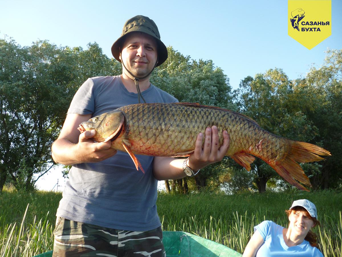 Сазан у рыбака