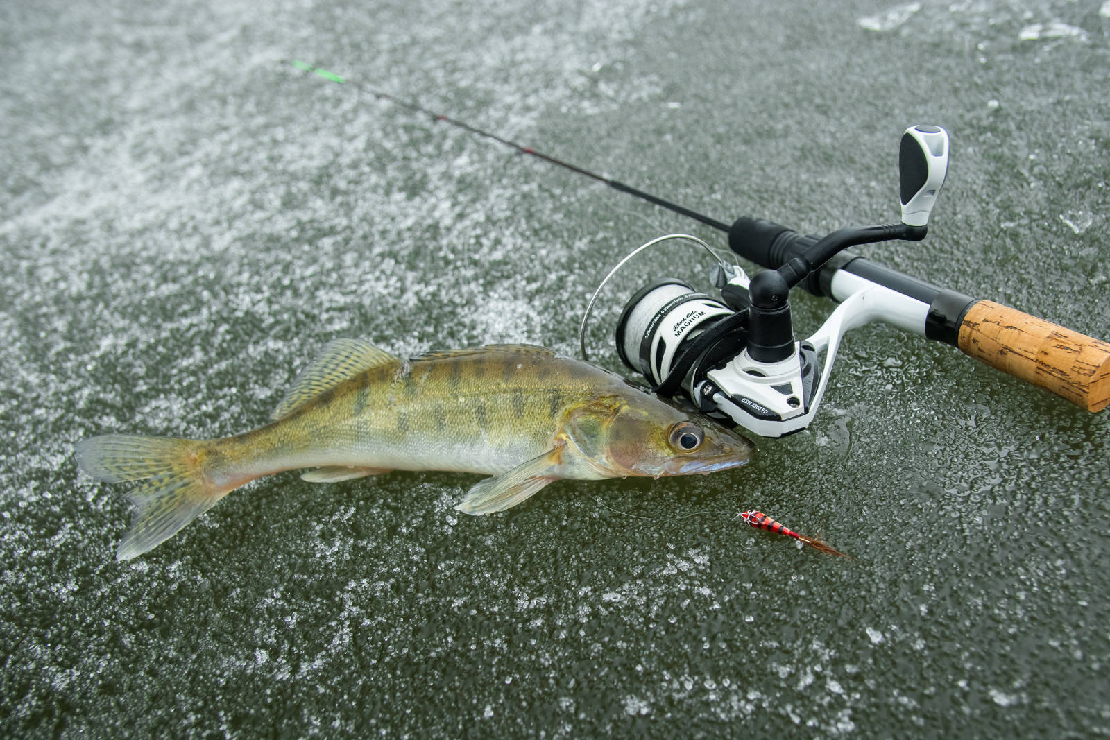 Спиннинг для зимней рыбалки