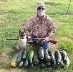 Охотник и сиамская кошка
