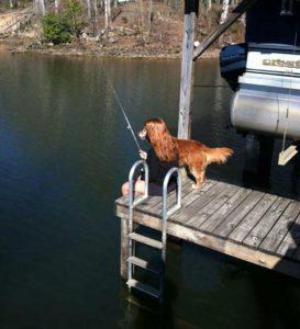 Пес рыбачит с рыбаком