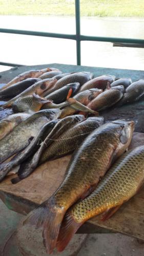 Рыбалка на сазанов и сомов