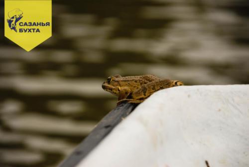 Лягушка на лодке