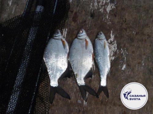 Астраханский улов