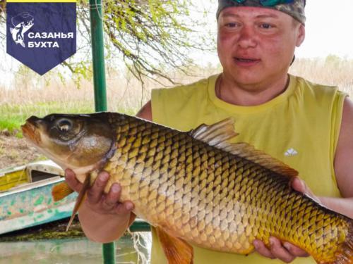 Рыбалка на сазана летом