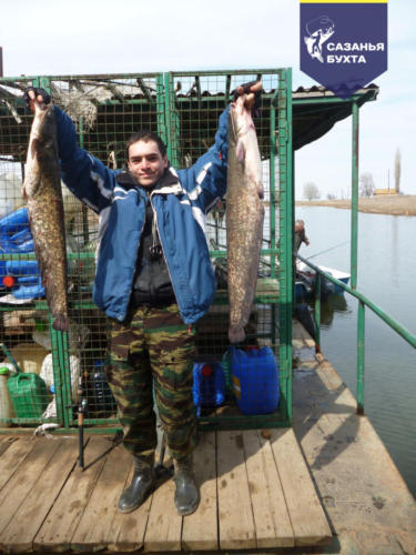 Рыбак с уловом сомов