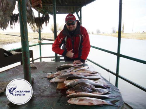 Рыбак с уловом жерехов и сазанов на Базе