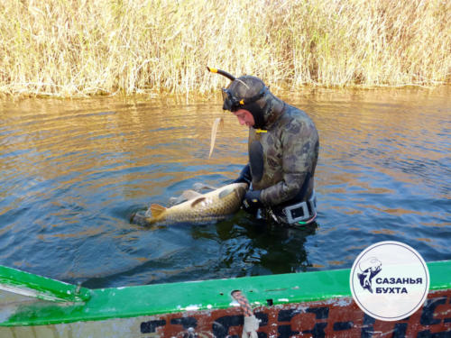 Улов сазанов - подводная охота в дельте