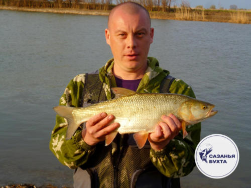 Жерех - отчет о рыбалке