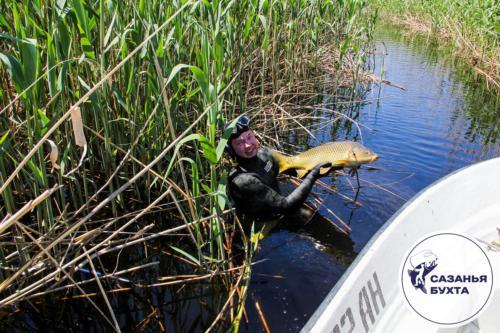 Подводная охота на сазана